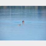 schwimmen mit den Enten im Faakersee