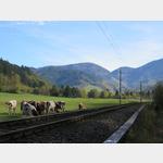 Bahnlinie von Münstertal Richtung Staufen